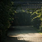 Tajemniczy ogród (ostatni post tego lata)