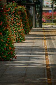 Aleja kwiatowa
